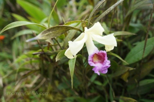 wild orchid growing on the side of the road in Costa Rica