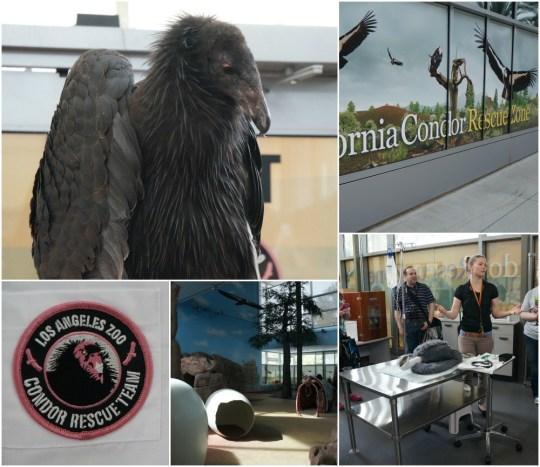 California Condor Rescue Program, Los Angeles Zoo