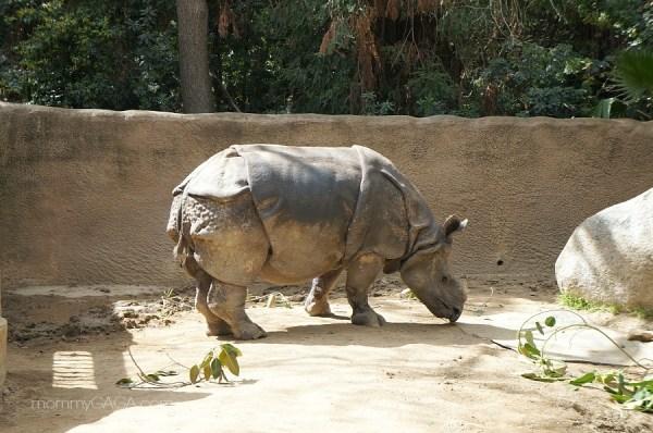 Rhinoceros Exhibit at the Los Angeles Zoo, California