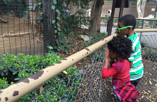 KIND at the Los Angeles Zoo, kids looking at the animals