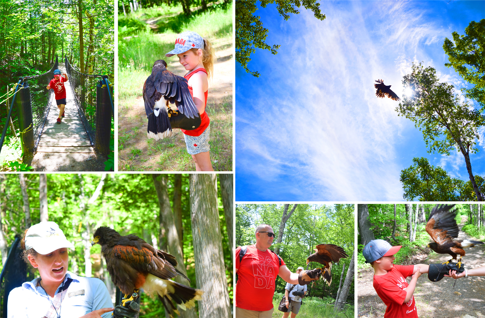 Falconry Apprentice - Tremblant
