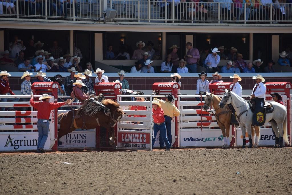 Calgary Stampede saddle bronc
