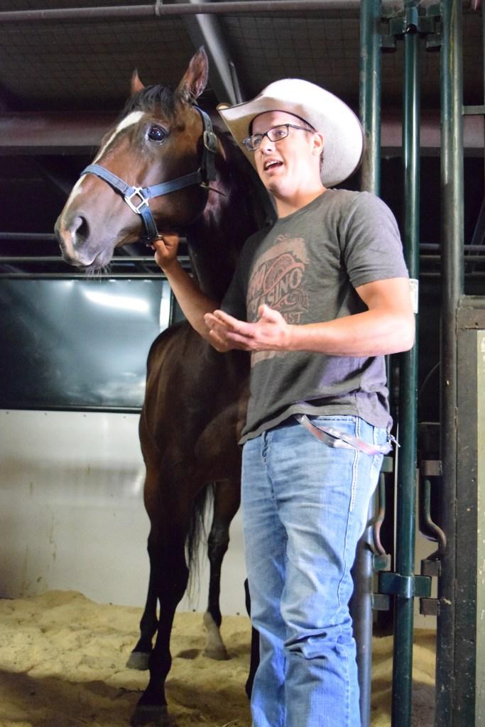 Chuckwagon horse at Calgary Stampede