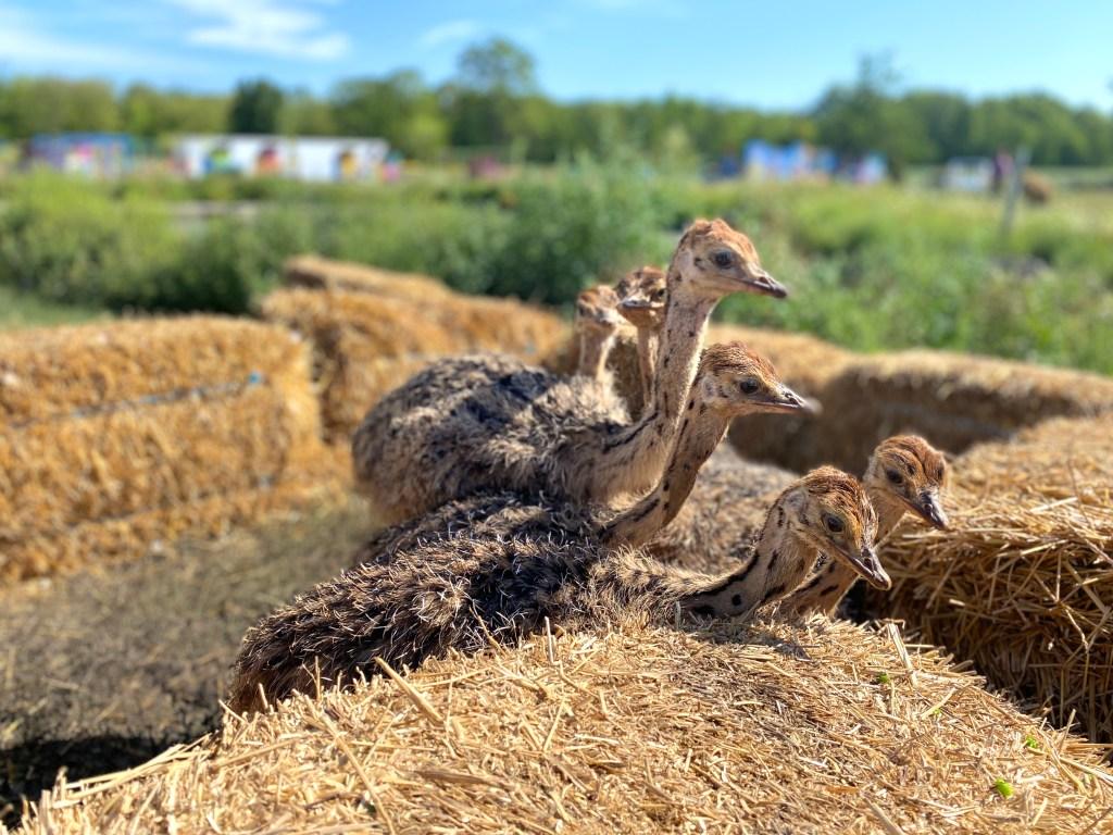 ostrich land ontario