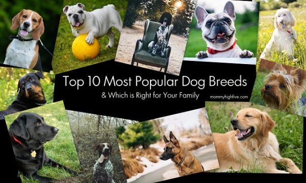 Top 10 Most Popular Dog Breeds & Which is Right for Your Family