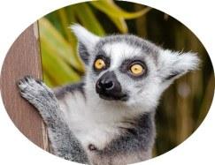 Madagascar - Kids animated movie