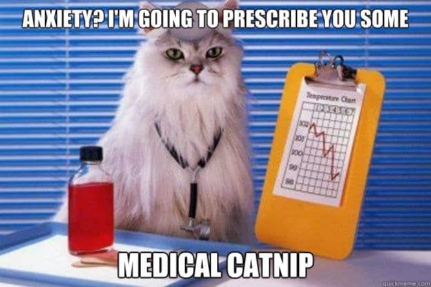 Image result for catnip meme