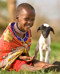 world vision goat 1