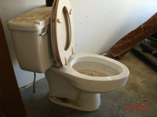 Toilet Dirty
