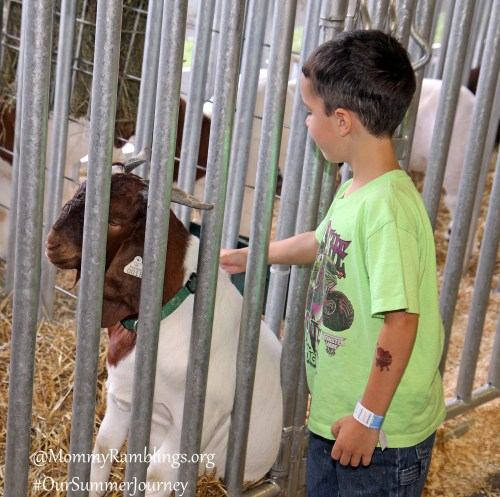 Petting The Goats at the Fair!!!  #OurSummerJourney