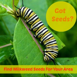 Milkweed Seed Finder Graphic