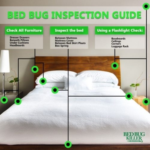 Bed Bug Checklist Guide Graphic
