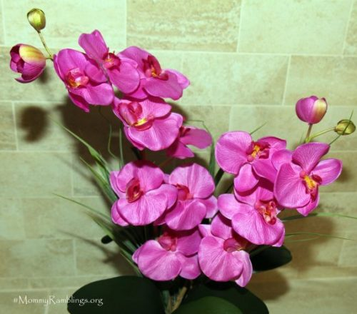 orchid-silk-plant