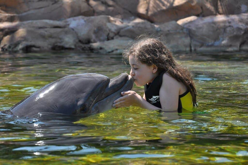 Kissing dolphins at Discovery Cove