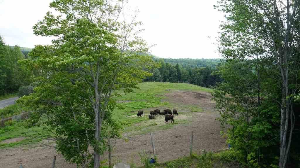 Bison Farm in Rawdon