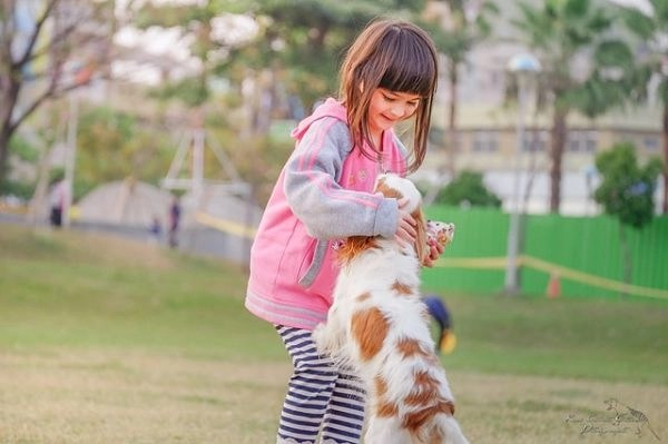 best-dog-breeds-for-kids