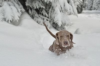 tips-take-care dogs-winter