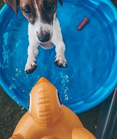 hemp-oil-relax-dogs