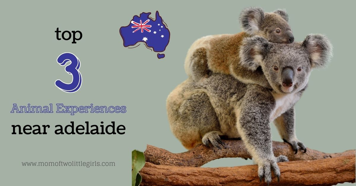 top 3 animal experiences near adelaide