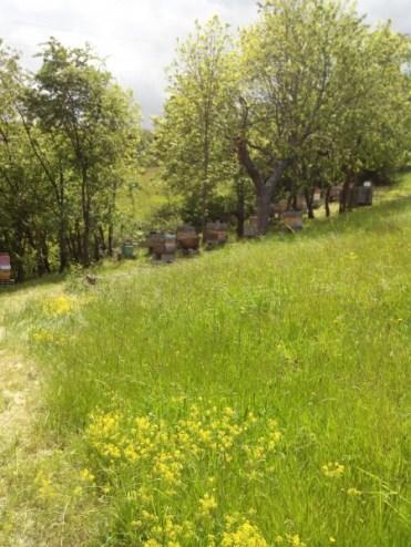 chateauneuf- loire-42-apiculture-rucher-le-pillier (1)