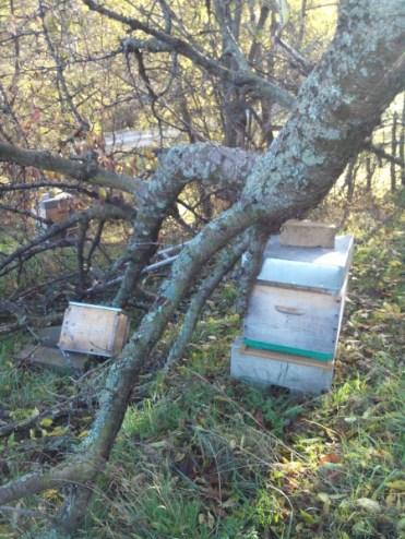 mon-abeille-rucher-du-pilier-4