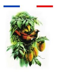 Tatouage Couleur réaliste oiseaux arbre