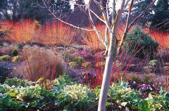 Autumn Tips For Your Garden