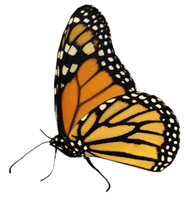 Monarch-Lover-favicon