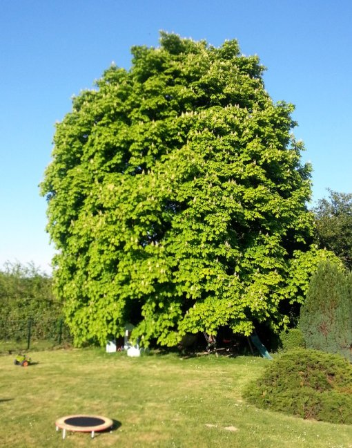mon-arbre