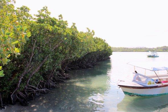 ile-cerfs-mangrove