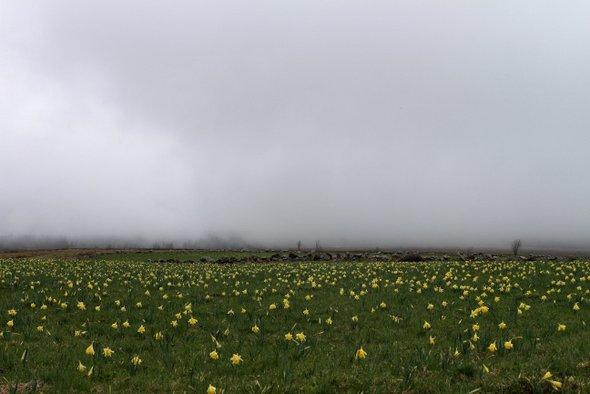 auvergne-brouillard