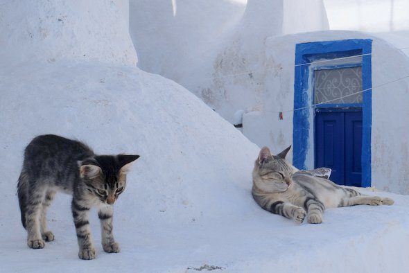 santorin-thirissia-cats