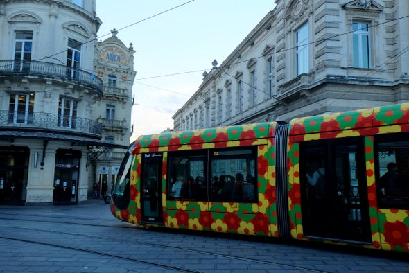 montpellier-tramway-fleurs