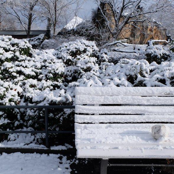 zoo-berlin-neige