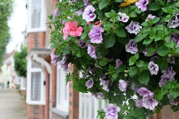 horsham-flowers