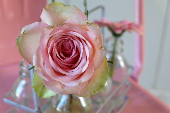 rose-deco