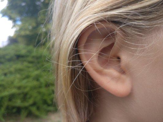 «Tout le monde a les oreilles percées» (mais pas chez un tatoueur)