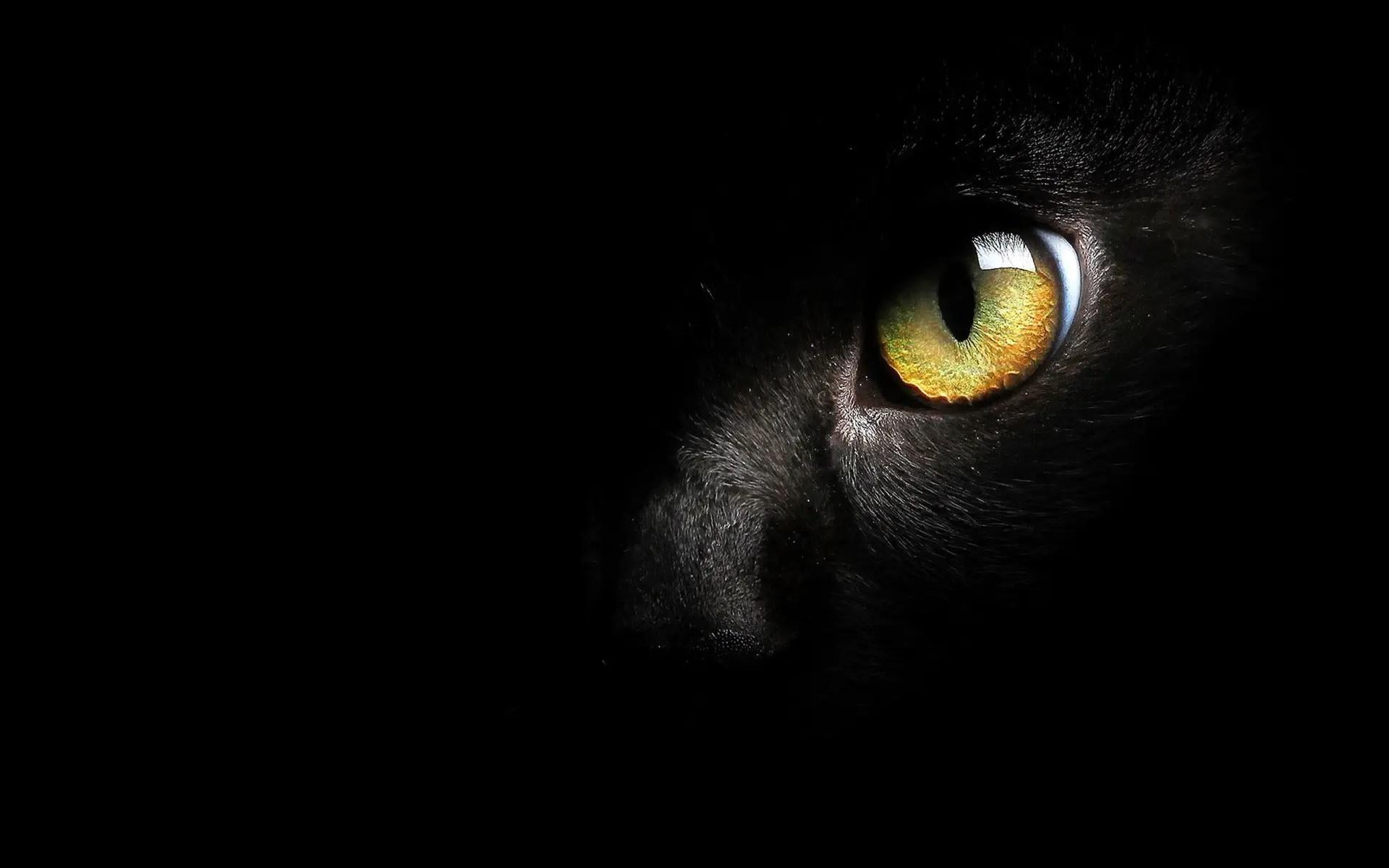 seul oeil de chat noir visible