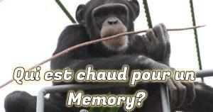 Ayumu, le chimpanzé surdoué
