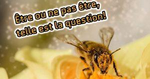 Les abeilles savent manier des concepts abstraits : 3 exemples renversants