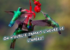 Les colibris ont-ils une bonne mémoire?