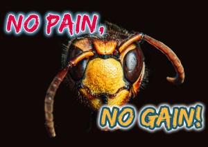 Les insectes ressentent-ils la douleur?