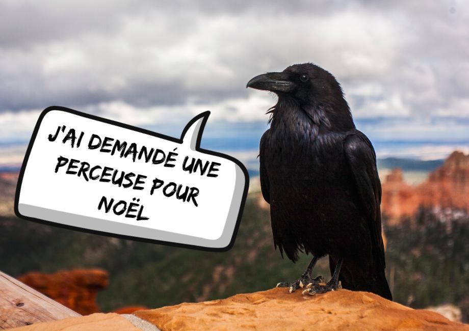 Les outils des corbeaux : 3 exemples très surprenants!