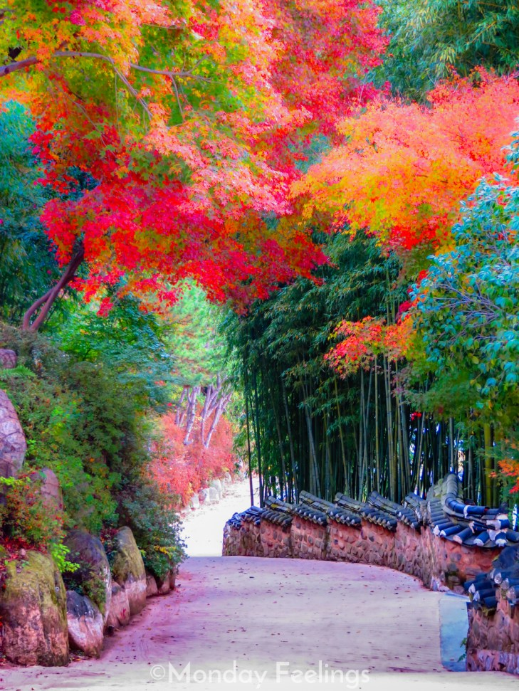 Leaves of trees chaging colour during Autumn