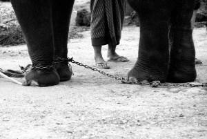 My Feet, My Freedom by siewlian.