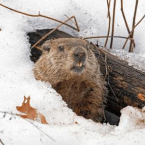 Inauguration de Biden ou le jour de la marmotte: Editorial