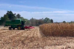 « Nouveaux OGM » : les louanges de la Commission européenne