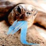 Sommersi dalla Plastica