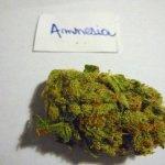 Amnésia, il calvario di mio figlio