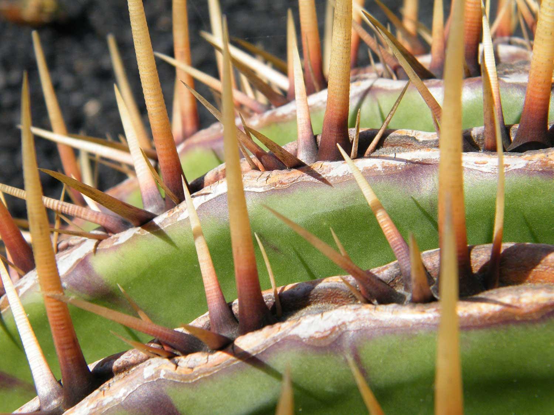 jardin de cactus viaggio a Lanzarote